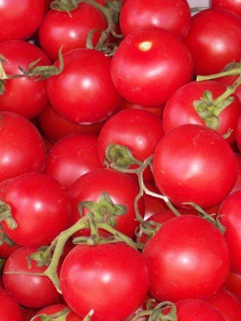 Klare Tomatenessenz