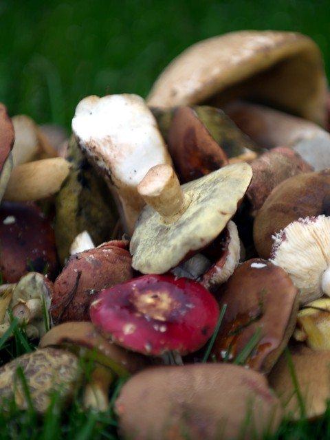 Küchen-Tipps & Tricks (19) – Pilze richtig einfrieren